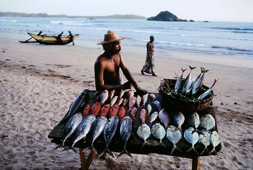 SRILANKA-10051, Fish seller, Sri Lanka, 1995